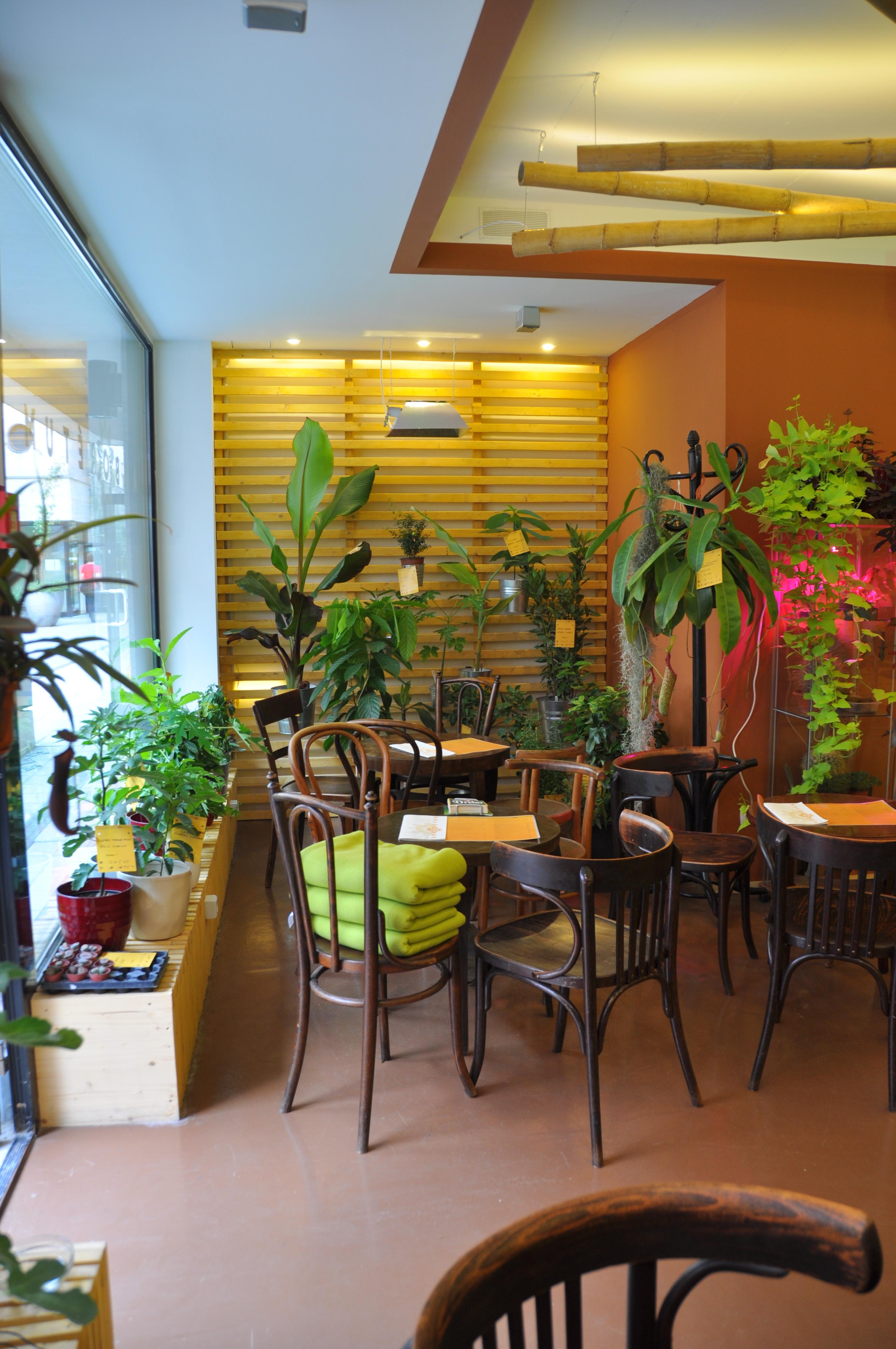 Arborétum Egzotikus Növénybár belsőépítészet